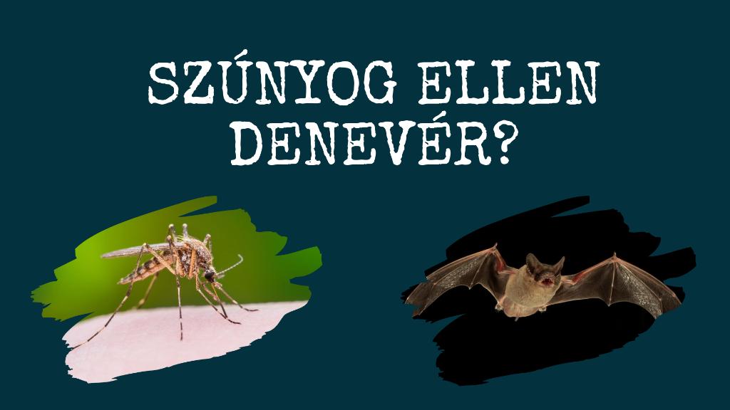 Szúnyog ellen denevér?