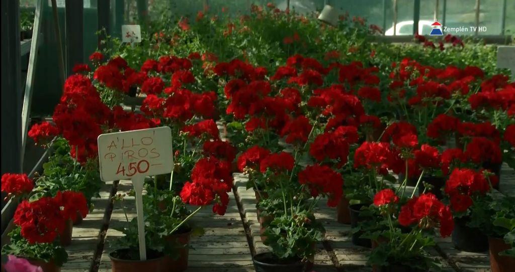 Palánták és virágok a mezőgazdasági iskola tangazdaságában